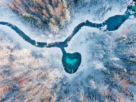 """Foto: Hiite kuvavõistluse võidupilt Hans Markus Antsoni kuva """"Metsa süda"""""""
