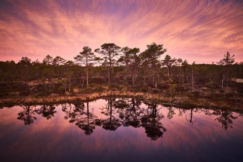 Foto: Kaupo Kikkas
