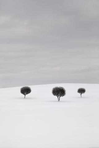 Foto: Looduslik minimalism. Ingemars Vekteris